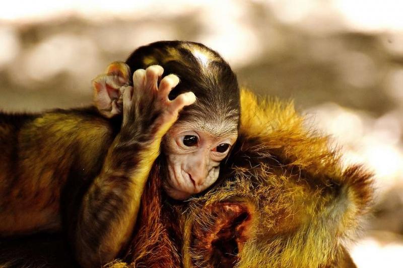 克隆猴在中国诞生克隆技术对人类将康有哪些影响
